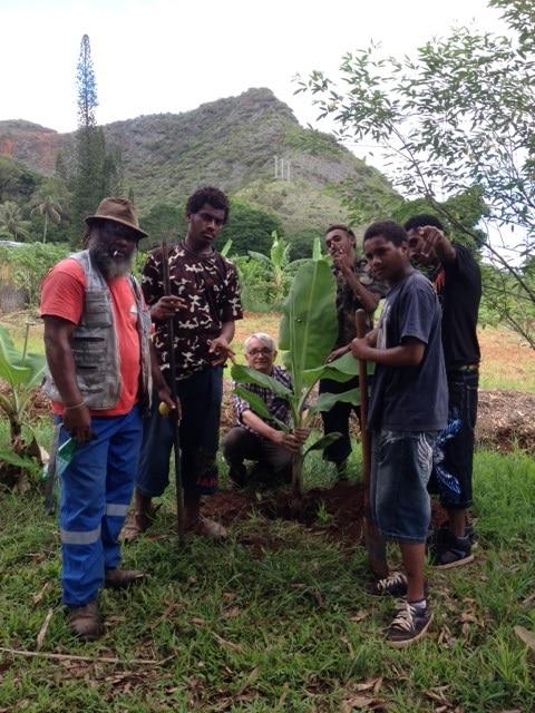 Bananier en terre à Do Néva (Houailou) avec des élèves du lycée agricole et leur professeur, DR